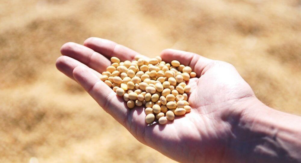 脂肪肝の予防に最適な大豆食品